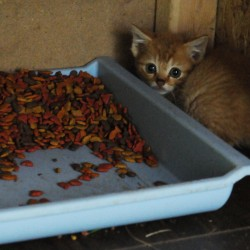 It takes more than catnip to care for homeless felines
