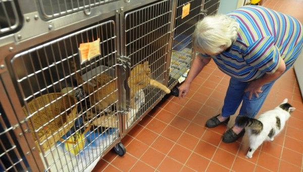 A woman named Ruth plays with a cat she is about to adopt at the Animal Orphanage in Old Town in October. Ruth chose a cat that had been at the shelter since June. Feral cats are harder to place and require people with lots of patience to adopt them.