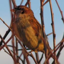 Sparrow Tour