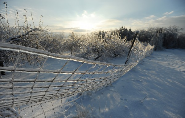 A fence enclosing an orchard near Bor Way in Ellsworth bends under the weight of ice on Saturday. About 4,500 Mainers were still without power as the sun set Saturday.