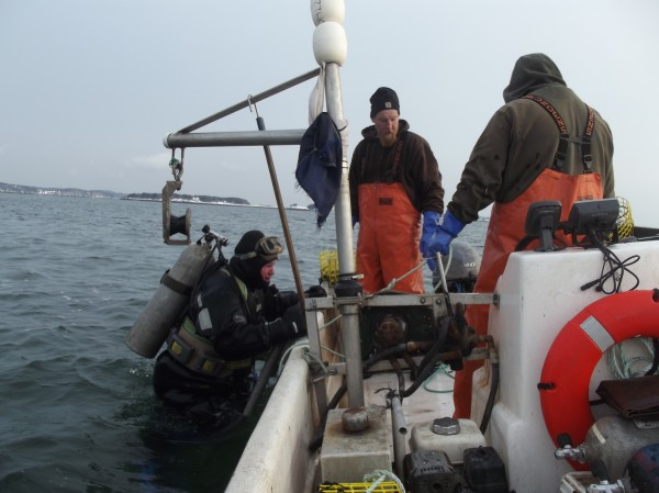 Paul Cox climbs aboard a skiff Friday after diving for scallops in Eastport. Also shown are Matthew Seeley (center) and Chris Leighton (right), also of Edmunds.