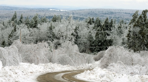 Trees across Maine have been hit hard by the recent ice storm.