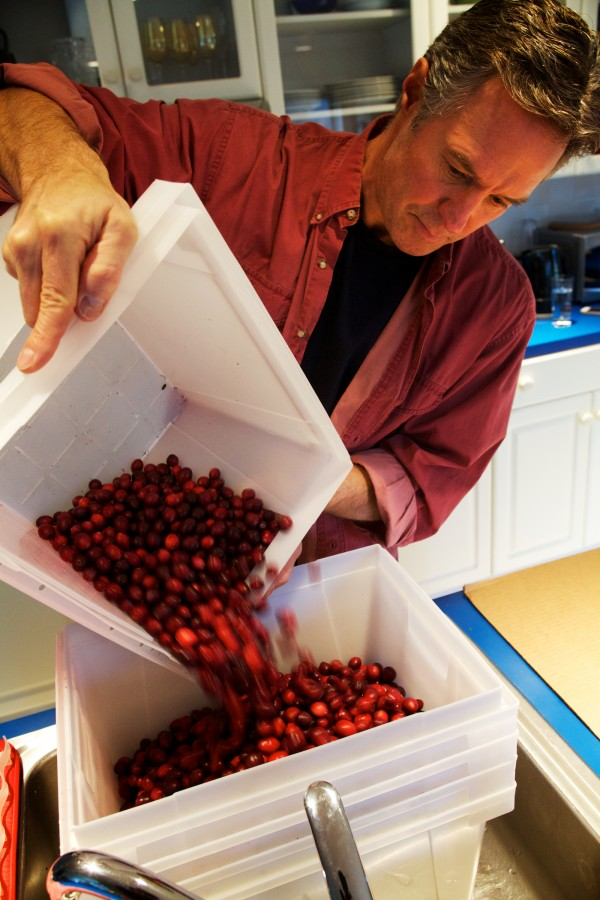 Patrick Whalen washes and sorts cranberries by size in his kitchen in Freeport. Once they are dried, his wife, Deena Prestegard, will turn them into colorful wreaths.