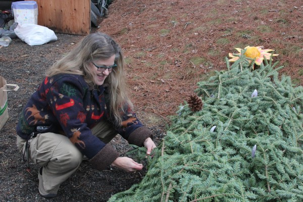 Gabrielle Graham decorates a tree for the Downeast Humanists and Freethinkers' float, which will feature in this year's Christmas parade in Ellsworth. The group hopes to draw attention to the Christmas tree's pre-Christian roots.