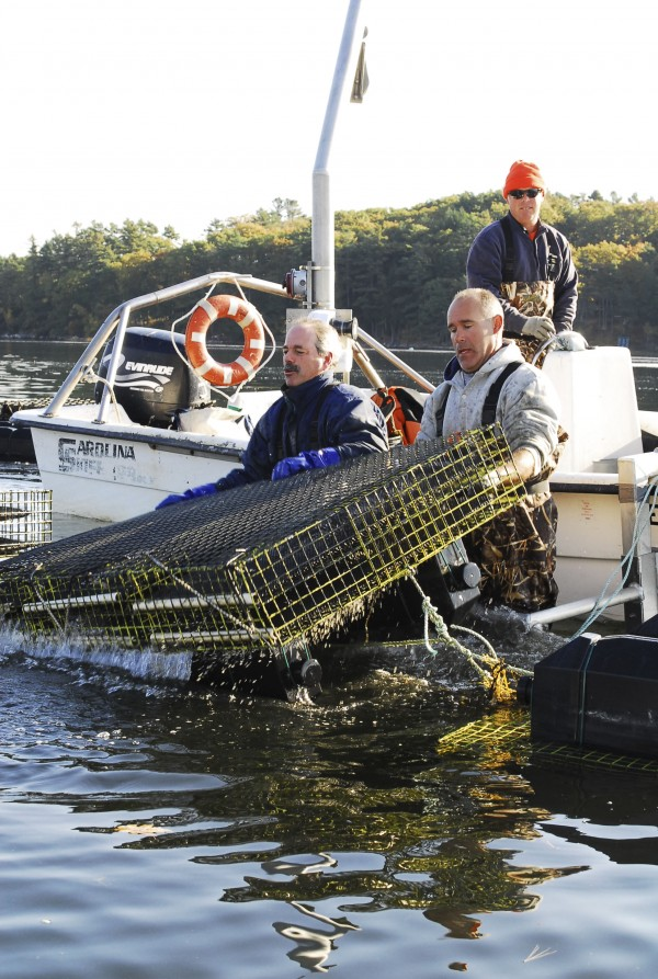 Oyster growers Bill Mook (left) and Andy Stevenson flip floats containing oyster nets on the Damariscotta River, as John Mitchell looks on from behind.