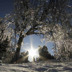Canada ice storm leaves about 500,000 homes without power