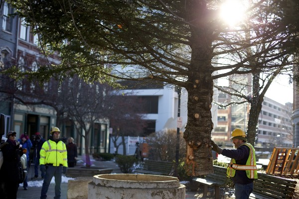 Andrew Carter, right, directs a bucket lift operator while placing the 2013 holiday tree in West Market Square Wednesday morning. The tree was donated to the city by Sprague's Nursery and according to Dan Sprague is 36 feet tall and about 27 years old.