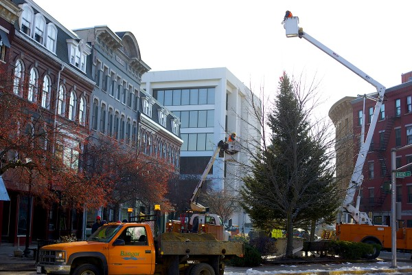 Bangor placed its 2013 holiday tree in West Market Square Wednesday morning. The tree was donated to the city by Sprague's Nursery and according to Dan Sprague is 36 feet tall and about 27 years old.