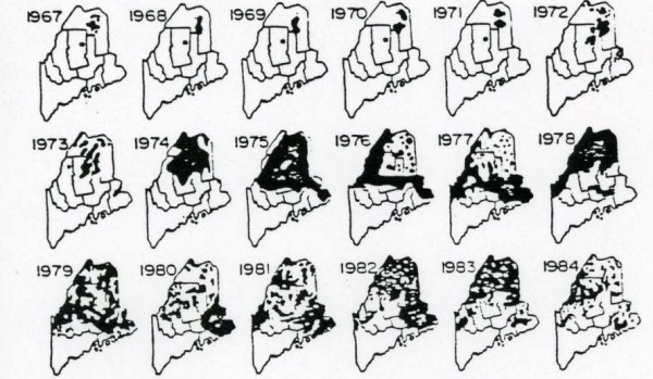 Maps show the spread of the spruce budworm throughout Maine in the 1970s and 1980s.