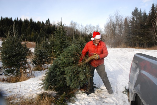 Vern Labbe loads a freshly cut Christmas tree into a waiting truck Saturday morning at this Labbe Tree Farm in Frenchville. &quotThe people who come here are like family,&quot the 62-year-old forester said. After raising and selling trees for three decades, Labbe is on his third generation of tree hunters.