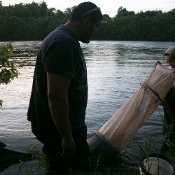 Maine elver fishermen face only 14 percent overall catch reduction
