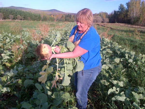 Dixie Shaw, Catholic Charities program director, harvests a big turnip earlier this year, part of the first Farm for ME crop that totaled 8,870 pounds of vegetables.