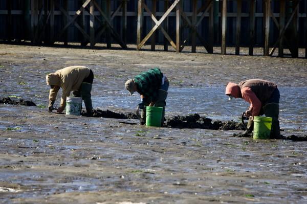 Concerns About Impact On Wildlife Habitat Wont Stop Scarborough
