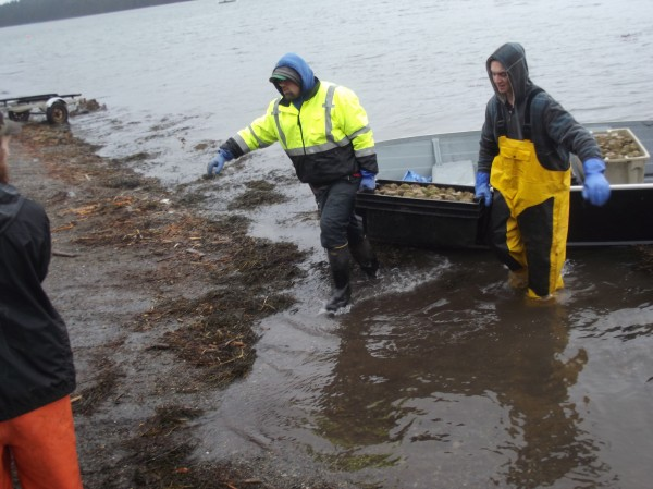 Josh (left) and Jeremy Lyons, both of Lubec, unload their limit of seven totes of sea urchins at the public boat landing at Cobscook Bay State Park in Edmunds on Monday.