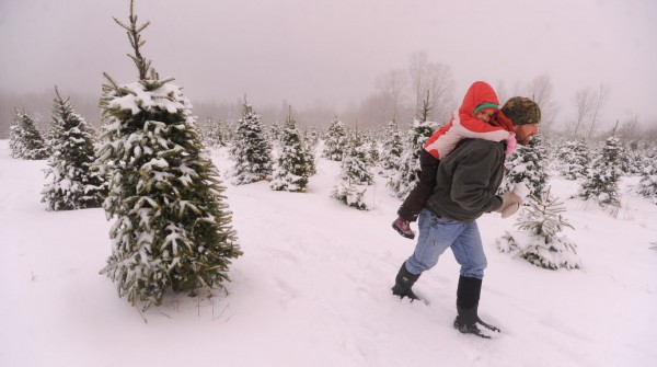 Thom Tardiff of Brewer carries his daughter Claire, 4, while trying to pick out a tree at the Piper Mountain Christmas tree farm in Newburgh Monday.