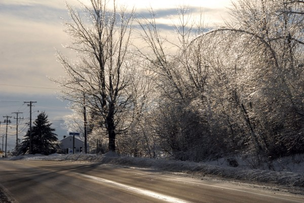 The cold afternoon sun gleams through the ice-covered trees growing alongside Odlin Road in Bangor on New Year's Day.
