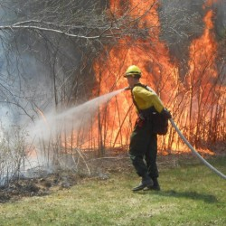Small forest fire spurs quick response
