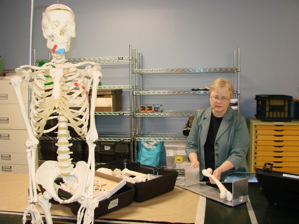 Marcella Sorg, University of Maine teacher and researcher who is forensic anthropologist for the Maine medical examiner's office, demonstrates how to use an osteometric board to measure long bone lengths in her anthropology lab at UMaine.