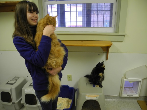 Ilianna Kahn, 12, cuddles a marmalade cat Thursday afternoon at the P.A.W.S. Animal Adoption Center. For her recent birthday, the sixth grader from Camden and Belfast asked her friends and family to give presents to the shelter's animals instead of to her. It's the third year in a row that she's done this. &quotI used to get so much stuff I didn't know what to do with it all,&quot she said, adding that she loves helping the animals.
