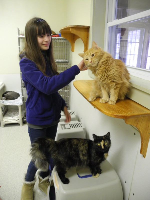12-year-old Ilianna Kahn plays with two of the cats now living at the P.A.W.S. Animal Adoption Center. She recently asked her friends and family members to give presents to the animals there instead of to her on her birthday.