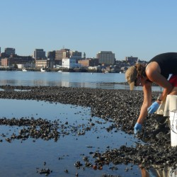 How shifting ocean chemistry threatens Maine