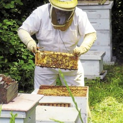 New kind of beehive makes for 'happy bees'