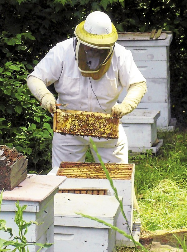 Known as the &quotBee-Whisperer,&quot Peter Cowin of Hampden tends bees in some of his hives.