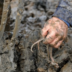 Bloodworm harvesting is a tough but liberating way of life for diggers Down East