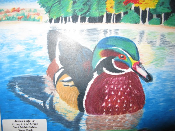 A past honorable mention of a wood duck by Jessica York of York.