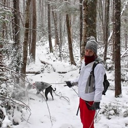 Hike the Newman Hill Trail of the Caribou Bog with a naturalist