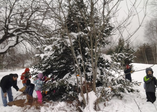 explore the winter trees at FPAC!