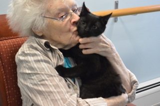 Photo courtesy of Devon Smith.  Quarry Hill resident Beulah Farrar bonds with Barry, a kitten participating in P.A.W.S.' Pat-a-Pet outreach program.