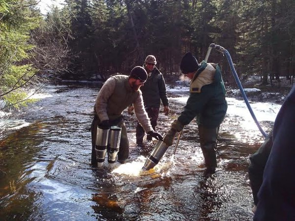 Kyle Winslow (from left) of the Downeast Salmon Federation and Colby Bruchs and Ernie Atkinson of the state Department of Marine Resources plant salmon eggs into the Machias River drainage north of Route 9 in Washington County earlier this month.
