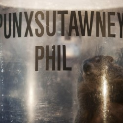 Punxsutawney Phil predicts 6 more weeks of winter