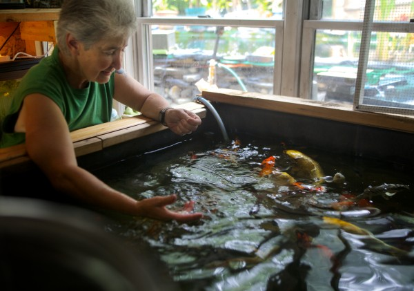 Georgette Curran of Cundys Harbor in Harpswell feeds and talks to her pet koi in the basement of her house Wednesday, June 27, 2012.