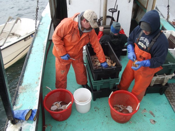 Ryan Priest of Dennysville (left) and Charles Sinclair of Charlotte (right) shuck scallops aboard the Drusilla L. in Eastport in December, depositing the meats in a plastic bucket.