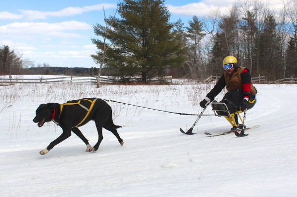 Joe Albee, 27, of East Vassalboro experiments with &quotmonoskijoring&quot at Heywood Kennel Sled Dog Adventures on Feb. 24, 2014, in Augusta. Albee has spina bifida, a disorder resulting in paralysis of his legs. He and his friends decided to try hooking sled dogs to his monoski so he could participate in local skijoring races.