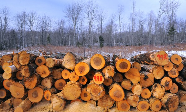 Recently harvested hardwood logs are piled up before being trucked from a J.D. Irving Ltd. logging site. The company owns about 1.2 million acres of woodland in Maine.