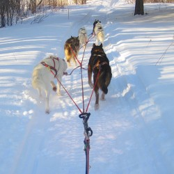 Mushing retirement home not such a bad idea
