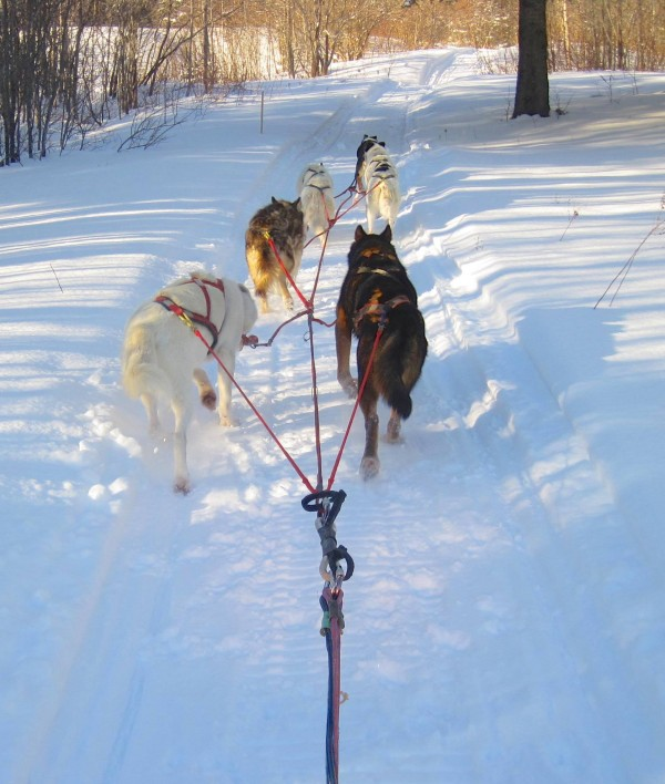 Be it on traditional dog sled or modern snowmobile, the Rusty Metal team is just happy to be on the trail.