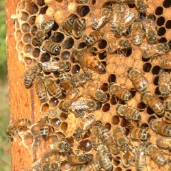 Hampden man teaching newcomers art of beekeeping