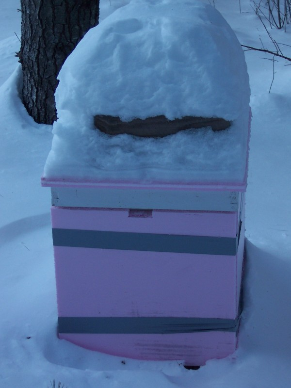 Hives overwintering in a shady location do better with insulation.