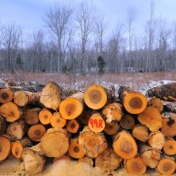 Is Irving deal a path to 'scientific forestry' or loophole for clearcutting?