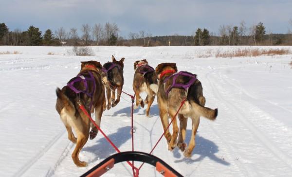 Heywood Kennel Dog Sled Adventures in Augusta on Feb. 24, 2014.