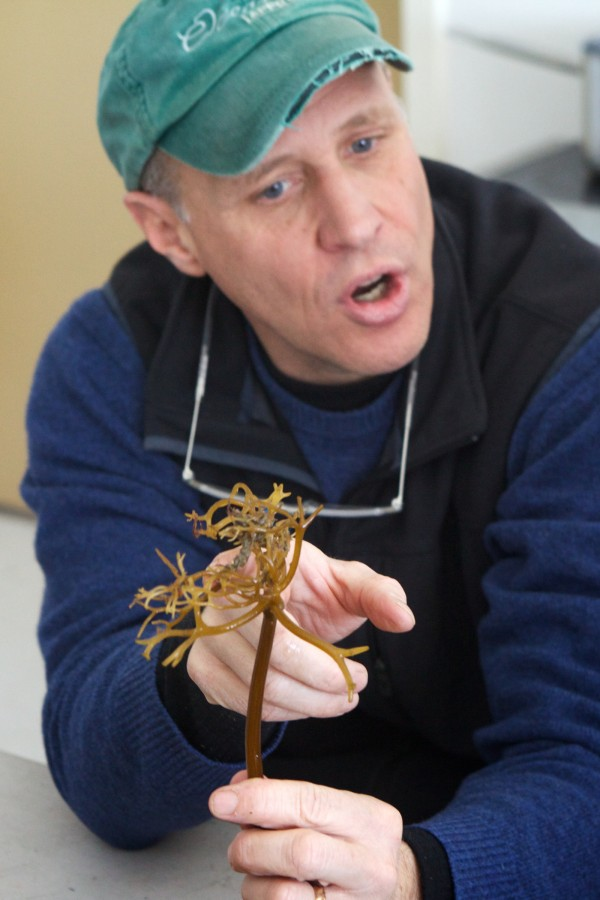 Paul Dobbins, co-founder of the Portland-based kelp farm Ocean Approved, shows the root end of a strand of sugar kelp, known as the holdfast, to students at Portland's East End Community School on Wednesday.