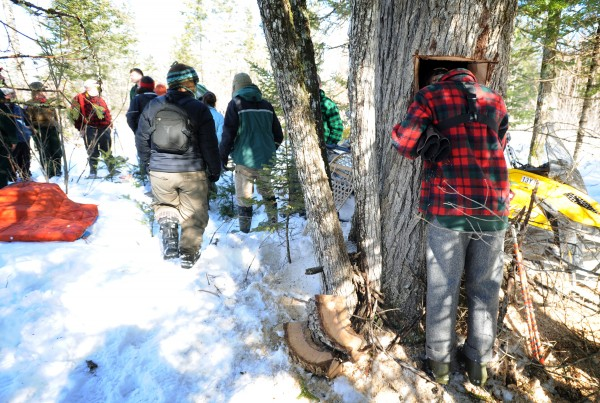 Jonah Gula peeks into a hole cut in the tree of a bear den to check out the sleeping and tranquilized bear before she was pulled out by Maine Department of Inland Fisheries and Wildlife biology technicians for a checkup and to give her a new GPS radio collar.
