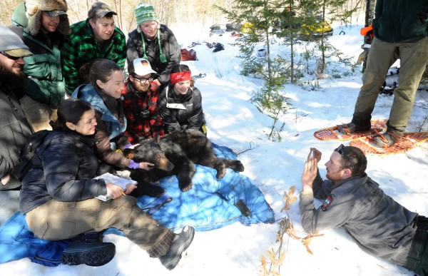 Before returning the bear to her den, Maine Department of Inland Fisheries and Wildlife biology technician Jake Feener (right) takes a picture of the wildlife students who participate in the Unity College Bear Study with the department.