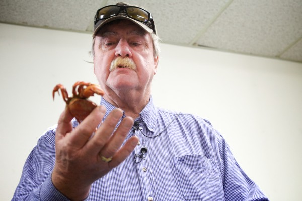 Ron Howse of Tidalwater Seafood Company holds a cooked green crab at a press conference in Brunswick on Thursday. His company is interested in processing the invasive species for food.