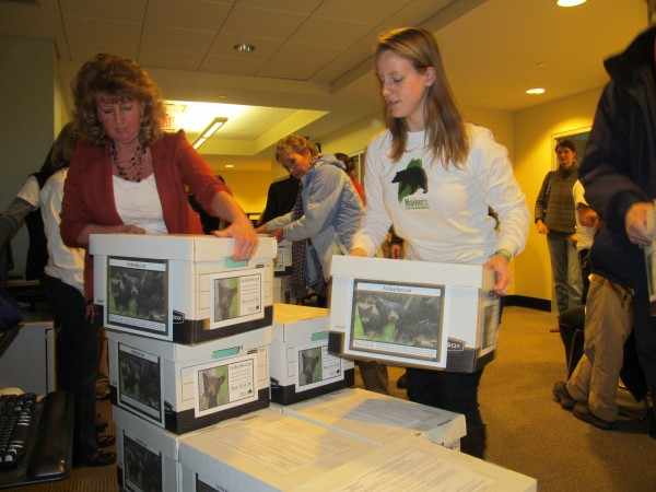 Kate McPherson of Windham, right, stacks boxes of petition signatures by Mainers who support a ban on bear baiting, hounding and trapping Monday at the Bureau of Elections in Augusta. Mainers for Fair Bear Hunting delivered more than 70,000 signatures in an effort to put the ban on the November Ballot.