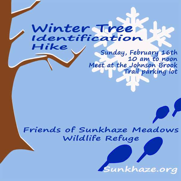 Want to learn more about the trees native to our Maine forests?  Bring your snowshoes and join the Friends of Sunkhaze Meadows for a Winter Tree Identification Hike on Sunday February 14, 2014.